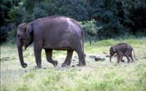 Sri-Lanka Safari