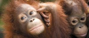 Borneo Turtle Island Orang Utan Tour & Beach  Holidays